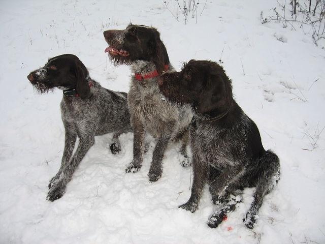 3 собаки на снегу