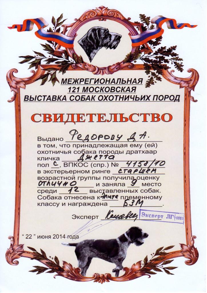 121-я Московская областная выставка охотничьих собак_Джетта
